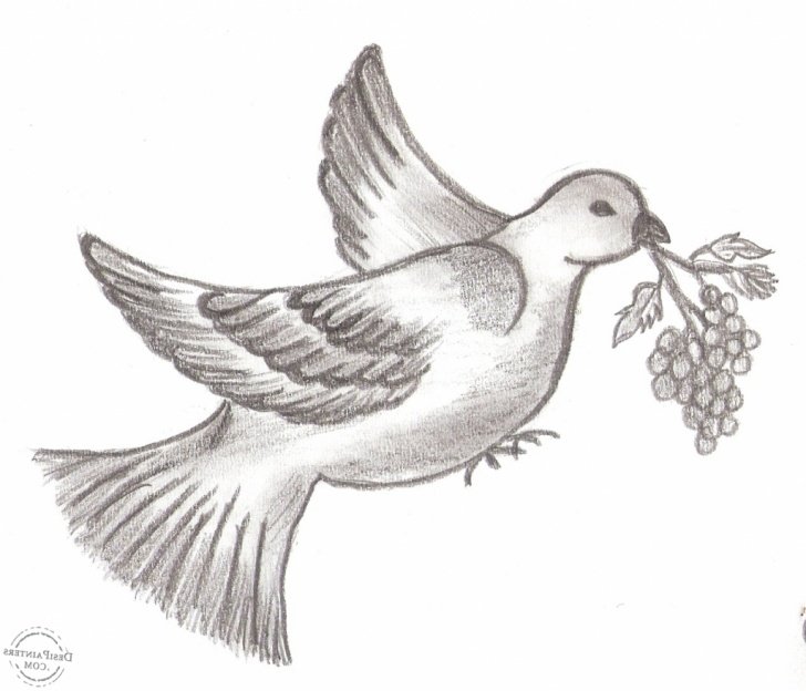 Interesting Pencil Pencil Drawing Courses Pencil Sketch Pictures Of Birds At Paintingvalley   Explore Image
