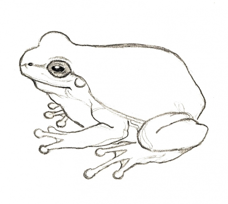 Interesting Pencil Sketch Of Frog for Beginners Free Frog Drawing, Download Free Clip Art, Free Clip Art On Clipart Photos
