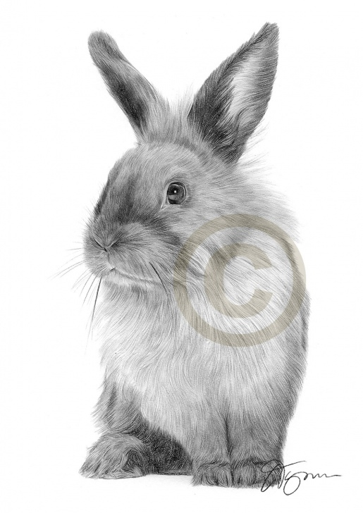 Interesting Rabbit Pencil Drawing Tutorials Pencil Drawing Of A Rabbit By Artist Gary Tymon Images
