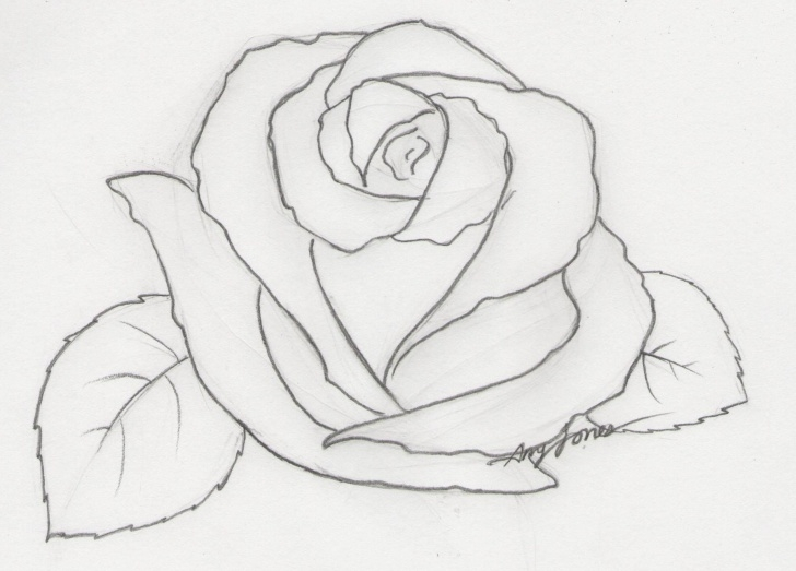 Interesting Rose Pencil Drawing Step By Step Step by Step Easy Pencil Drawings Of Flowers Step By  | Drawing And Painting Images