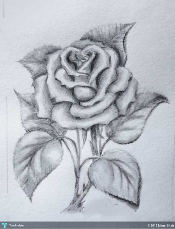 Interesting Rose Pencil Shading Tutorial Pencil Shading | Touchtalent - For Everything Creative Pic