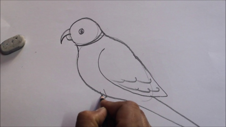 Interesting Simple Pencil Sketch Drawing Easy Parrot Pencil Sketch Step By Step||Easy & Simple ||Tutorials Photo