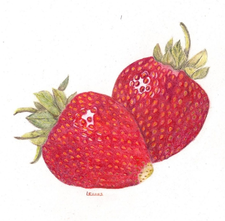 Interesting Strawberry Pencil Drawing Tutorial 17 Most Cool Strawberry Pencil Drawing Colored Techniques At Pic