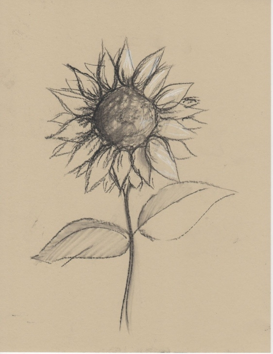 Interesting Sunflower Pencil Drawing Courses Black+And+White+Sketches+Of+Flowers | Any Medium Even Just Pencil Pics