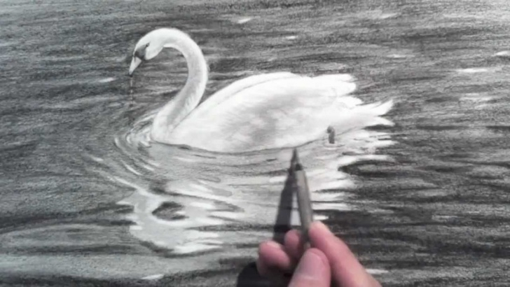 Interesting Swan Pencil Drawing for Beginners Drawing A Swan - Time Lapse Pic