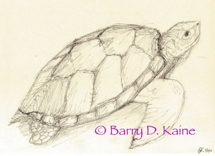 Interesting Tortoise Pencil Sketch for Beginners Sea Turtle Pencil Drawing 680 Print | Sketch Ideas | Pencil Drawings Pic