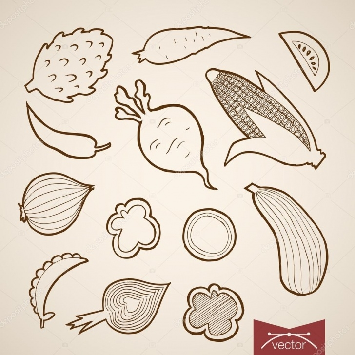Interesting Vegetables Pencil Drawing Step by Step Pencil Sketch Of Vegetables Collection — Stock Vector © Sentavio Picture