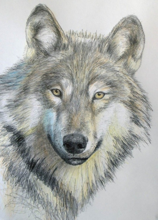 Interesting Wolf Drawings In Pencil Simple How To Draw A Wolf In Pencil — Online Art Lessons Photo