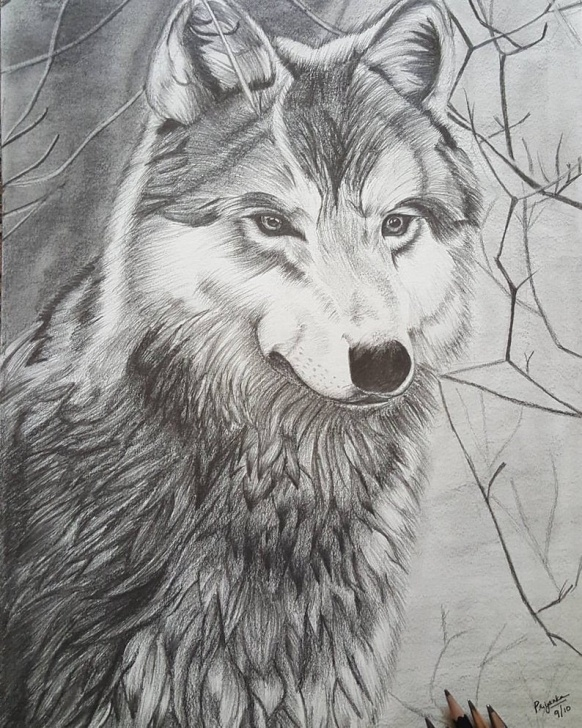 Interesting Wolf Pencil Sketch Tutorial The Lone Wolf, Pencil Sketch, Pencil Art,wolf Pencil Art, Wolf Wall Decor,  Wolf Wall Hanging, Animal Art, Animal Gift Ideas, Wolf Frame,wolf Pics