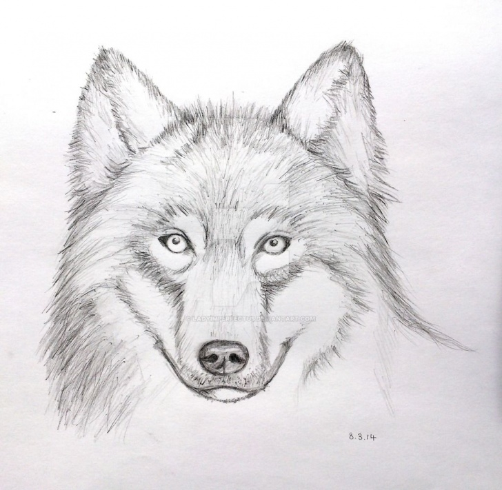 Interesting Wolf Pencil Sketch Tutorials Pin By Debbie Roberts On Drawing Ideas In 2019 | Face Pencil Drawing Pictures