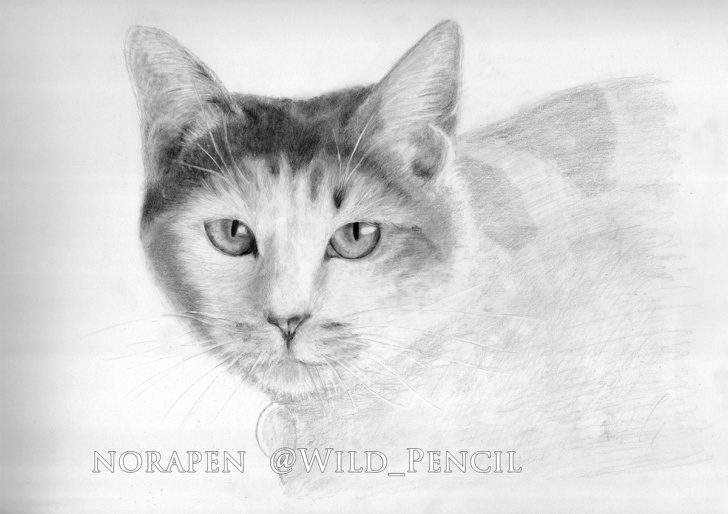 Learn Black Cat Pencil Drawing Easy Black Cat Pencil Drawing A Big Of Head Free Cute — Barriotaqueria Picture