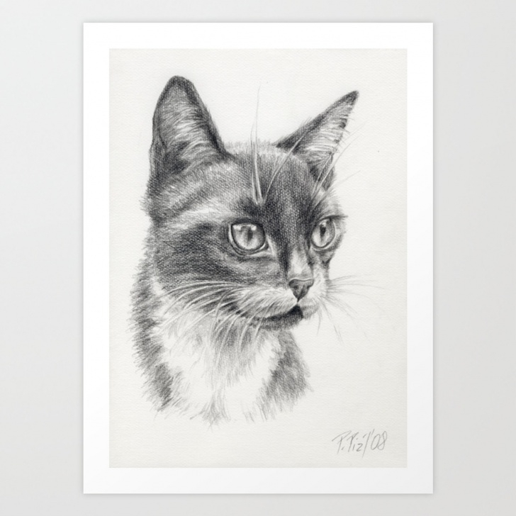 Learn Black Cat Pencil Drawing Ideas Black Cat Portrait Black & White Graphite Pencil Drawing Art Print Pic