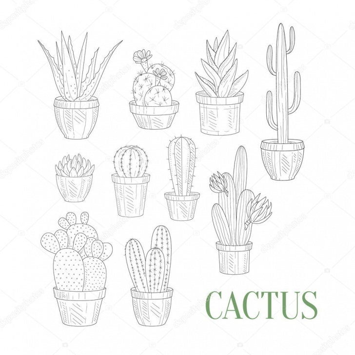 Learn Cactus Pencil Drawing Techniques 11+ Beautiful Cactus Pencil Sketch Photos - Sketch - Sketch Arts Image