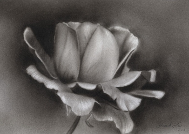 Learn Charcoal Flower Drawings Techniques Pin By Eileen Carpenter On Art | Easy Charcoal Drawings, Pencil Photos