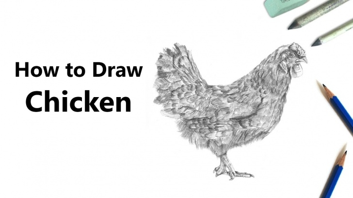 Learn Chicken Pencil Drawing Tutorials Chicken Pencil Drawing - How To Sketch Chicken Using Pencils Image