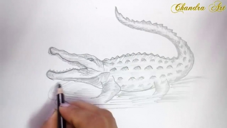 Learn Crocodile Pencil Drawing Courses Drawing A Crocodile - How To Draw A Crocodile Step By Step For Beginners  With Pencils Picture