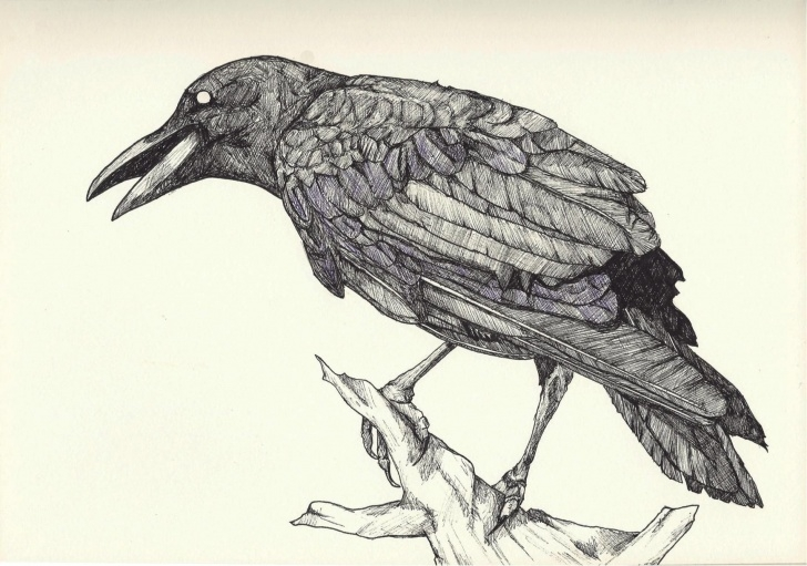 Learn Crow Pencil Sketch for Beginners Image Result For Evil Crow Drawings | Art | Crows Drawing, Crow Bird Image