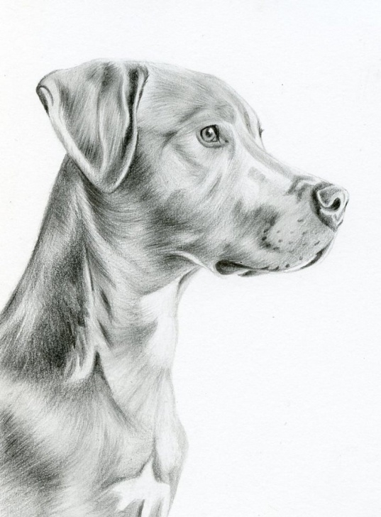 Learn Dog Pencil Sketch Techniques Custom Pencil Drawing, Size 5 X 7, Custom Pet Portrait, Custom Pet Drawing,  Dog Art, Dog Portrait, Dog Pencil Drawing, Graphite, Pet Art Image