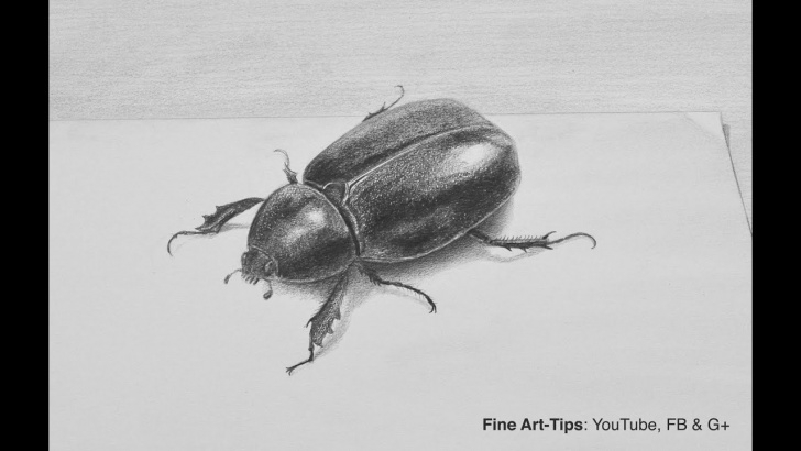Learn Drawing Insects Pencil Techniques for Beginners How To Draw A Beetle With Pencil In 3D - Insect Picture