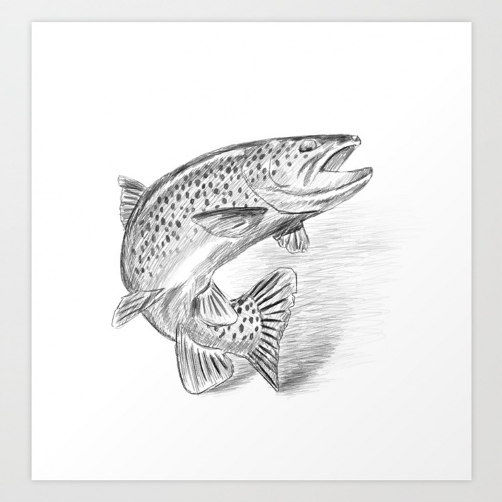 Learn Fish Pencil Drawing Free Fish Pencil Drawing Art Print Pics