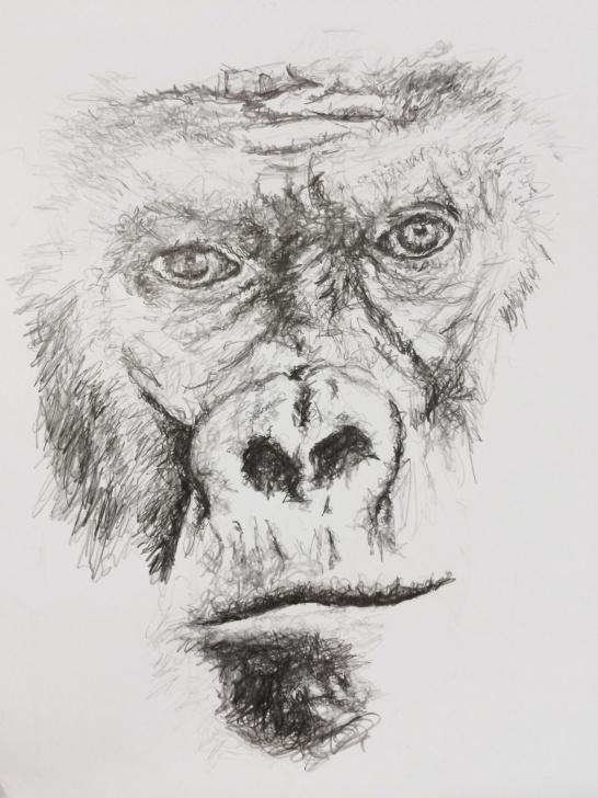 Gorilla Pencil Drawing