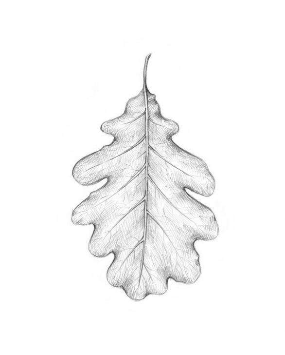 Learn Leaf Pencil Shading Tutorial How To Draw A Leaf Step By Step Photo