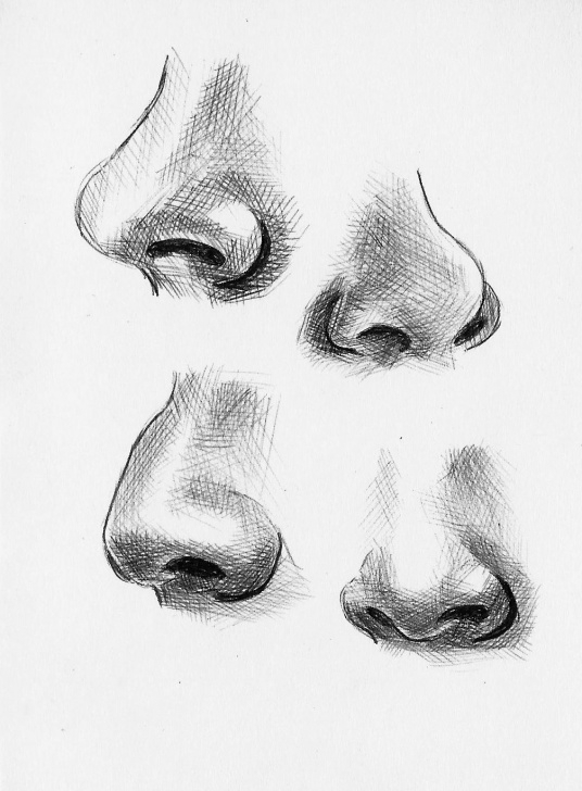 Learn Nose Pencil Drawing Courses Feature Variations: Noses | Art In 2019 | Art Sketches, Nose Drawing Image