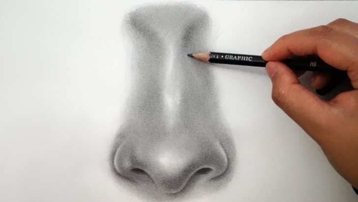 Learn Nose Pencil Drawing Free How To Draw A Nose - Easy Pictures