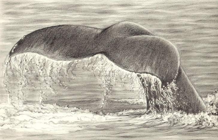 Learn Ocean Pencil Drawing Free Drawings Of Oceans - Google Search | Beauty | Ocean Drawing, Pencil Images