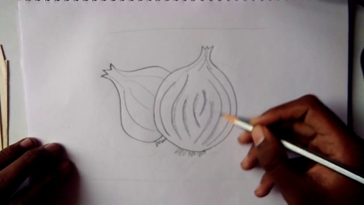 Learn Onion Pencil Drawing Easy How To Draw Onion Step By Step For Kids Pencil Sketch Pics
