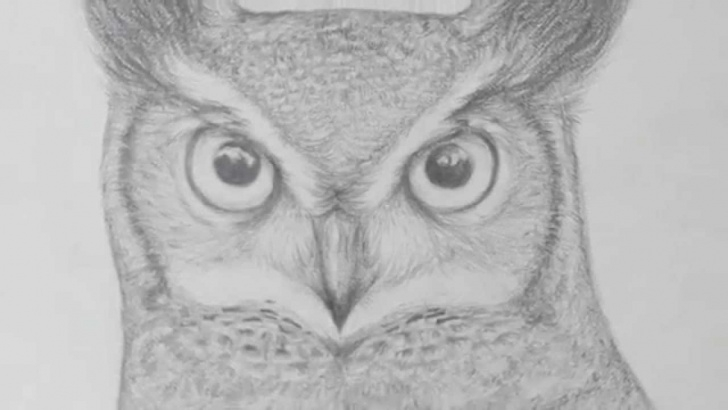 Learn Owl Pencil Drawing Tutorial Pencil Owl Drawing Photo