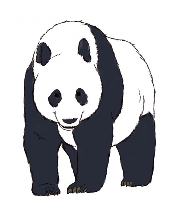 Learn Panda Drawing Realistic Lessons How To Draw Realistic Panda Bears -- Via Wikihow | Vbs & Sunday Pics