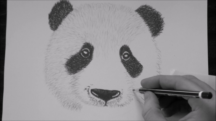 Learn Panda Pencil Sketch Courses How To Draw A Panda Step By Step With Pencil Photos