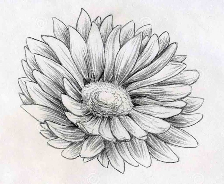 Learn Pencil Sketch Drawing Of Flowers Techniques Pencil Sketch Daisy Flower Drawings Drawing | Picked Tats | Pencil Pic