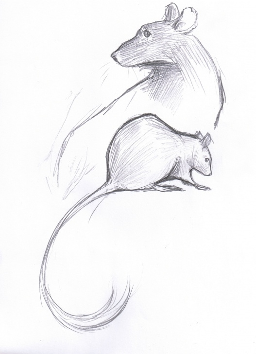 Learn Rat Pencil Drawing Step by Step Pencil | Rat Girl Studios | Ratties In 2019 | Pencil Drawings Picture