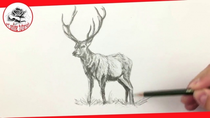 Learn Reindeer Pencil Drawing Tutorials How To Draw A Deer With Pencil Drawing Techniques (Subtitled) Pic