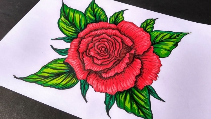 Learn Rose Drawing Colour Free How To Draw A Rose | Beautiful Rose Drawing | Color Pencil Drawing | Brush  Pen Drawing Pics