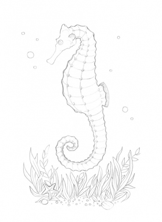 Learn Seahorse Pencil Drawing Easy How To Draw A Seahorse With Black And Grey Ink Liners Image