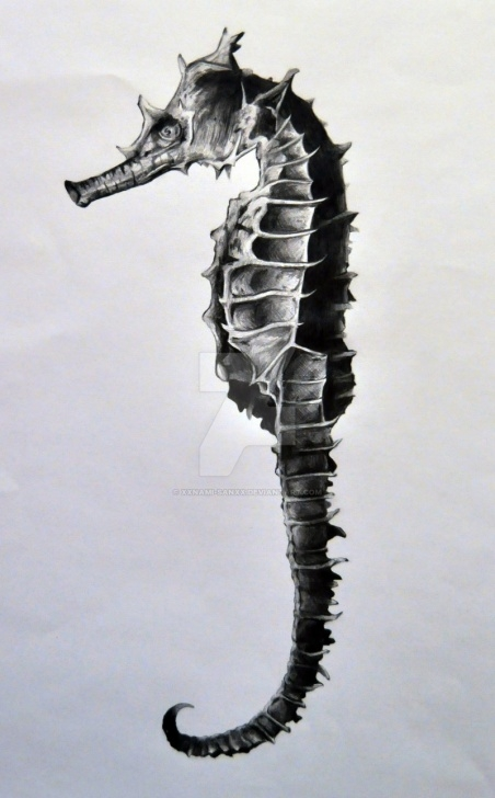 Learn Seahorse Pencil Drawing Lessons Seahorse Drawing By Namiiru On Deviantart Image
