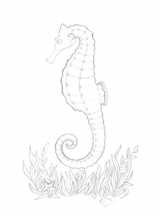 Learn Seahorse Pencil Drawing Simple How To Draw A Seahorse With Black And Grey Ink Liners Image