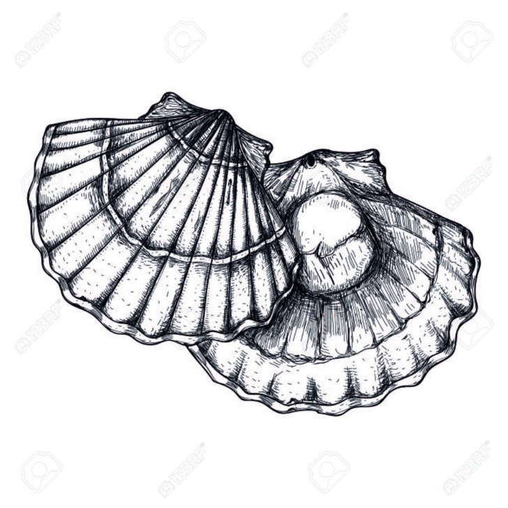 Learn Seashell Pencil Drawing Ideas Seashell Pencil Drawing | Free Download Best Seashell Pencil Drawing Pics