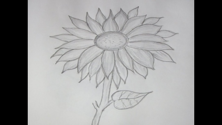 Learn Sunflower Pencil Drawing Techniques How To Draw And Sketch A Sunflower Using Pencil Pictures