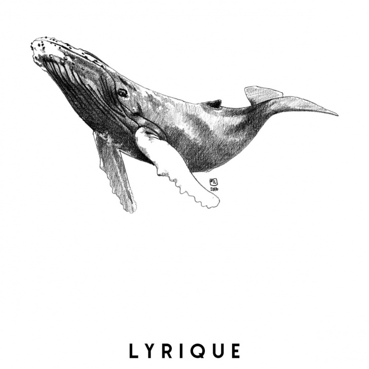 Learn Whale Pencil Drawing for Beginners Marie Casaÿs, Animal Totem, Illustration, Pencil Drawing, Dessin Pictures