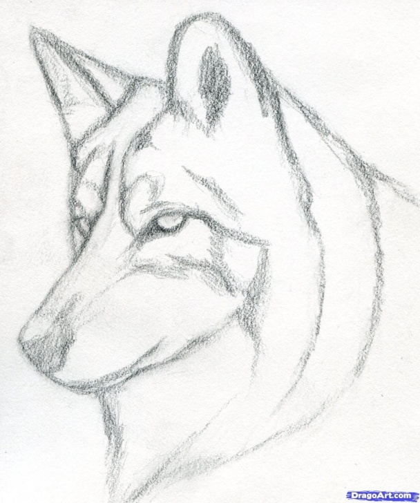 Learn Wolf Drawings In Pencil Simple How To Draw A Wolf Head, Mexican Wolf Step 3 | Drawing | Drawings Picture