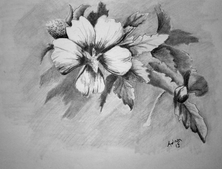 Learning Beautiful Sketches Of Flowers for Beginners Beautiful Sketches Of Flowers | Beautiful Pencil Drawings Of Flowers Images