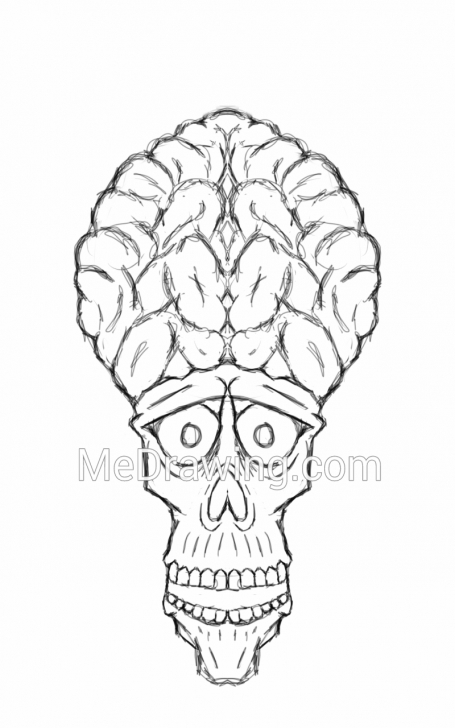 Learning Brain Pencil Drawing Tutorial Skull With Giant Brain Pencil Sketch Images