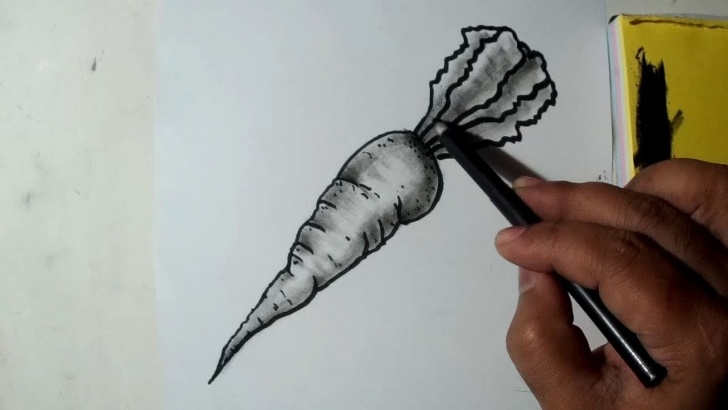 Learning Carrot Pencil Drawing Easy How To Draw A Carrot || Easy Sketch, Draw, Shade Pictures