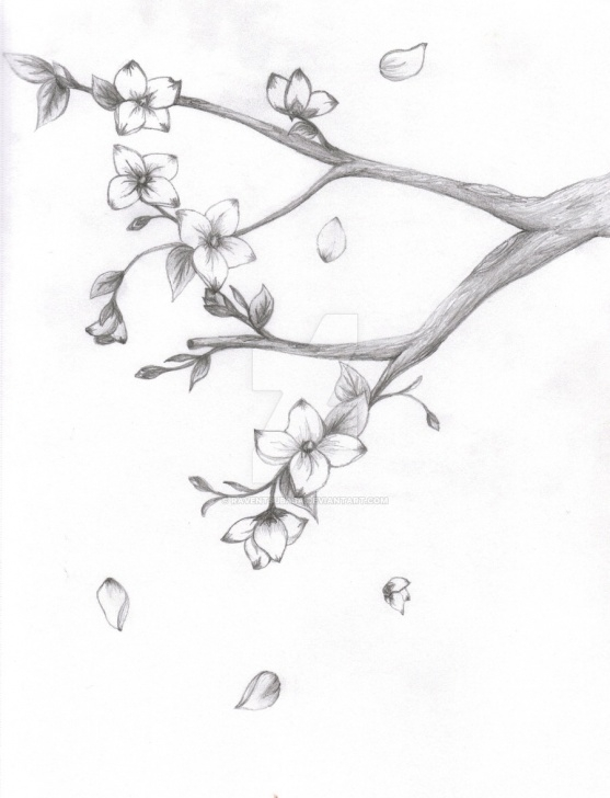 Learning Cherry Blossom Pencil Drawing Simple Japanese Pencil Sketch And Japanese Cherry Blossom Tree Pencil Photos