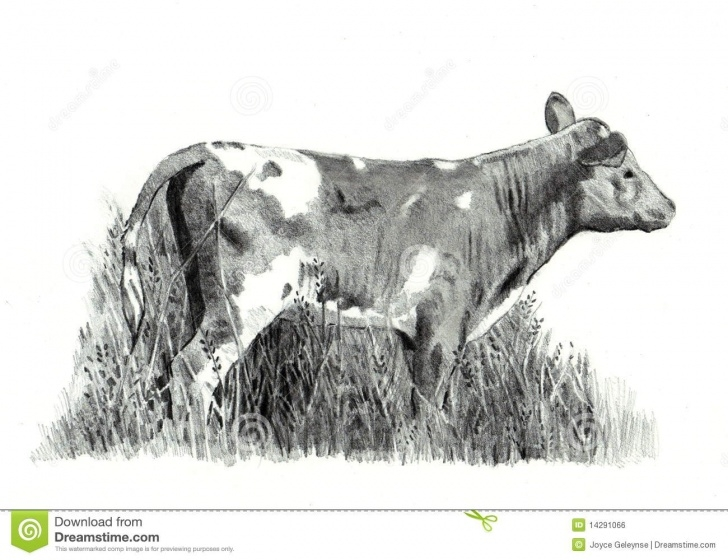 Learning Cow And Calf Pencil Drawing Easy Pencil Drawing Of Calf Standing In Grass Stock Illustration Picture