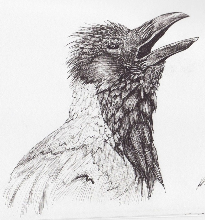 Learning Crow Pencil Sketch Techniques Crow Pencil Sketch At Paintingvalley | Explore Collection Of Pic